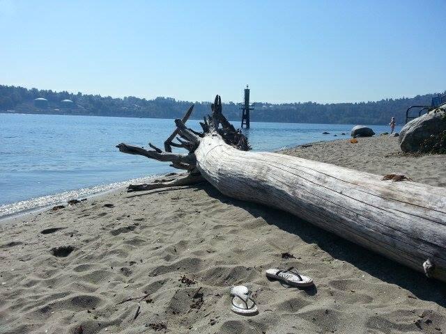 deep cove beach log