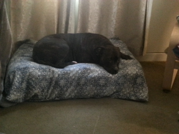 Doggy Bed from futon mattress-MJ