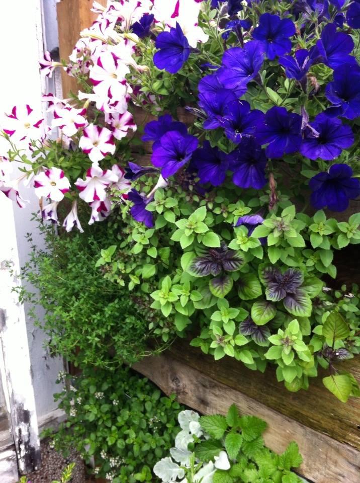 Jennifer's garden2