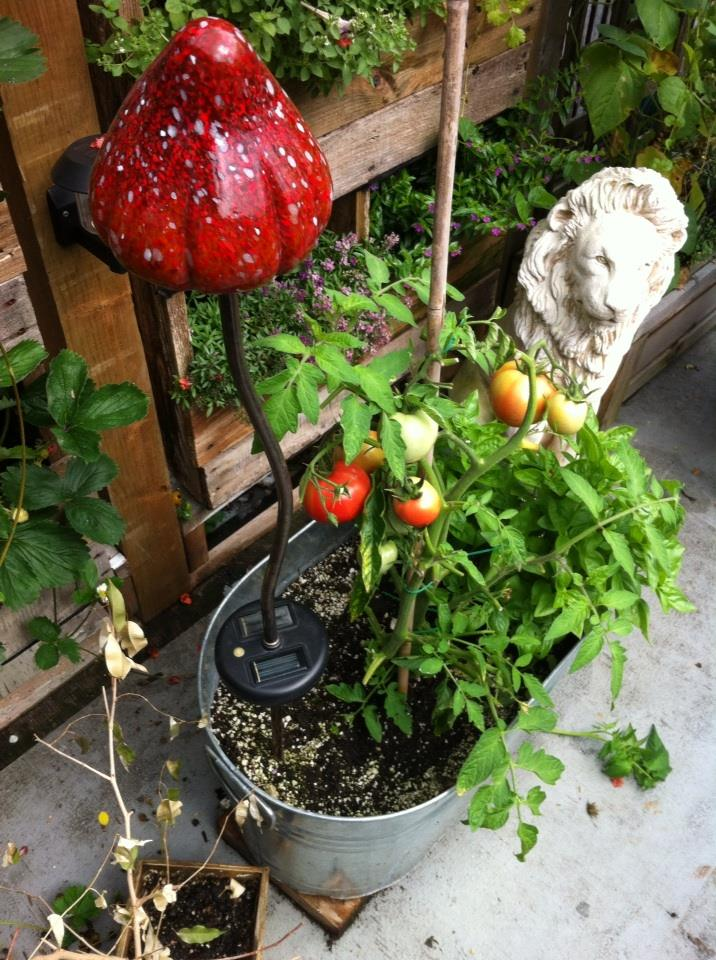Jennifer's garden3