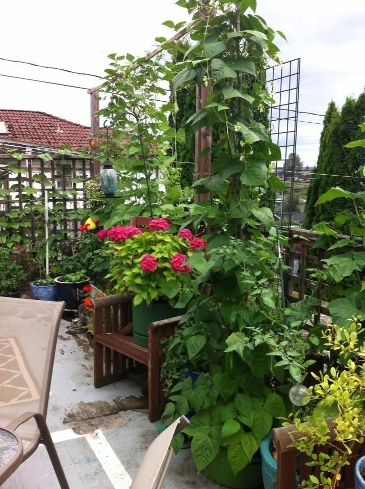 Jennifer's garden4