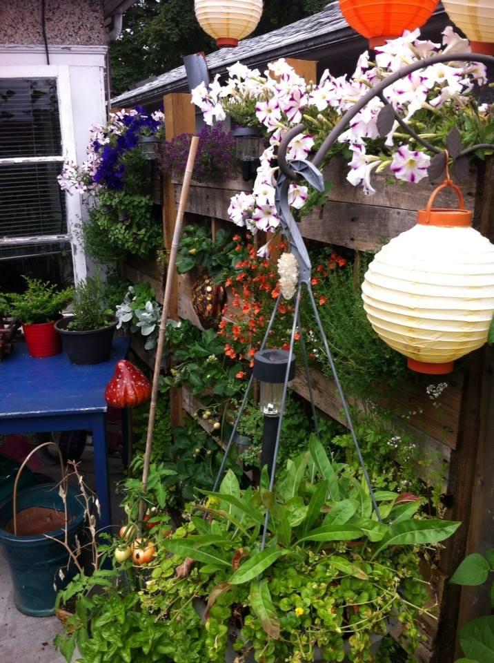 Jennifer's garden5