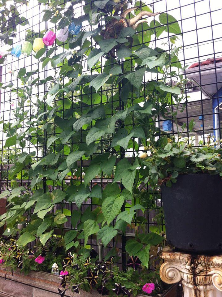 Jennifer's garden6