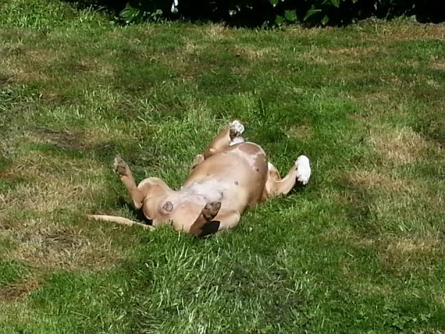 tiki suntanning