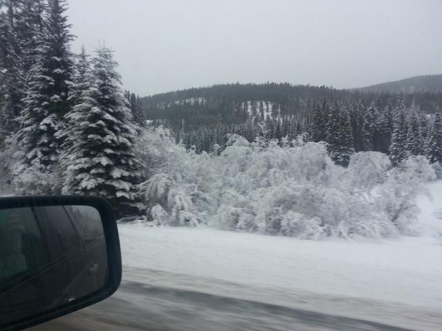 Snow - 2014